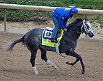 APRIL 30, 2015: Frosted, trained by Kiaran McLaughlin, exercises in preparation for the 141st Kentucky Oaks during morning workouts at Churchill Downs in Louisville, Kentucky. Ting Shen/ESW/Cal Sport Media
