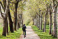 Milano, Parco Nord. Un uomo in mountain bike percorre un vialetto alberato --- Milan, Parco Nord. A man riding mountain bike on a tree-lined walkway