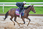 October 28, 2015 :   Pricedtoperfection, trained by Chad C. Brown and owned by Klaravich Stables Inc  & William H. Lawrence, exercises in preparation for the Breeders' Cup Juvenile Fillies Turf at Keeneland Race Track in Lexington, Kentucky on October 28, 2015. Scott Serio/ESW/CSM