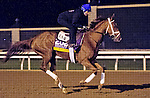 October 26, 2015 :  Curalina, trained by Todd A. Pletcher and owned by Eclipse Thoroughbred Partners, exercises in preparation for the Longines Breeders' Cup Distaff at Keeneland Race Track in Lexington, Kentucky on October 26, 2015. Scott Serio/ESW/CSM