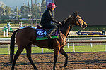 ARCADIA, CA  OCTOBER 31. Breeders' Cup Mile entrant Circus Maximus, trained by Aidan P. O'Brien,  exercises in preparation for the Breeders' Cup World Championships at Santa Anita Park in Arcadia, California on October 31, 2019.  (Photo by Casey Phillips/Eclipse Sportswire/CSM)
