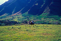 Couple riding horses near the majestic Koolau Mountains at Kualoa Ranch, on Oahu's windward coast
