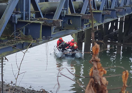 Lagan Search and Rescue on the search for the distressed seal spotted with a drinks can stuck to its lower jaw