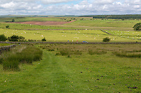 Cumbria, England, UK.  Cyclists on Road Leading to Birdoswald Fort, seen from Hadrian's Wall Footpath.