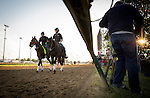 LOUISVILLE, KY - MAY 04: Film crews document Kentucky Derby favorite Nyquist as he is lead around the track by assistant trainer Jack Sisterson at Churchill Downs on May 04, 2016 in Louisville, Kentucky.(Photo by Alex Evers/Eclipse Sportswire/Getty Images)