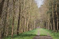 early breakaway group seen through the forest<br /> <br /> 105th Scheldeprijs 2017 (1.HC)<br /> 1 Day Race: Mol › Schoten (BEL/202km)
