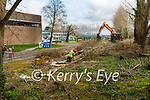 The removal of trees at the CBS the Green school on Monday