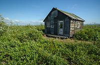 Abandoned cabin along the Kougarok Road, north of Nome, Alaska. Photo by James R. Evans