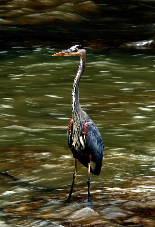 The Rocky River Reservation is part ofthe Cleveland Metroparks system. The system rings the city and is referred to as the Emerald Necklace. ..##I can provide more detailed captions detailing the types of flowers and birds shown at a later time. I have a call in to the park naturalist