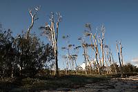 Bribie Island.Große Sandinsel vor der Küste Australiens. Sie liegt etwa 70 Kilometer nördlich von Queenslands Hauptstadt Brisbane. Bribie Island ist 34 Kilometer lang und bis zu 8 Kilometer breit..Bribie Island:.is a large sand island in the northern part of Moreton Bay, Queensland in Australia. Bribie Island is one of two islands connected to the Queensland mainland by a bridge. Foto: Karoline Maria Keybe<br /> <br /> phone: 00491577 7729355<br /> mail: karoline@karoline-maria.com<br /> adress: Ernestistraße 12.04277 Leipzig.01577 7729355.Steuernummer: 231/238/07774..Deutsche Bank, Konto-Nr. 1272228, BLZ 86070024.Keine Umsatzsteuerpflicht nach Kleinunternehmerregelung § 19 Absatz 1 UStG