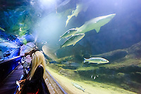 a Sand Tiger sharks is seen at the Deep Sea World, Edinburgh, Scotland on 2015/06/08. Foto EXPA/ JFK/Insidefoto