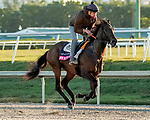 January 20, 2021:Storm The Court exercises as horses prepare for the 2021 Pegasus World Cup Invitational at Gulfstream Park in Hallandale Beach, Florida. Scott Serio/Eclipse Sportswire/CSM
