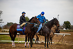 October 30, 2020: Calibrate, trained by trainer Steven M. Asmussen, exercises in preparation for the Breeders' Cup Juvenile at Keeneland Racetrack in Lexington, Kentucky on October 30, 2020. Alex Evers/Eclipse Sportswire/Breeders Cup