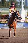 Discreet Dancer with jockey Javier Castellano after winning the 7th race at Gulfstream Park. Hallandale Beach, Florida. 01-07-2012