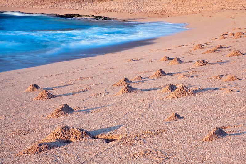 Sand crab mounds at sunrise. Kauai, Hawaii.