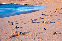 Sand crab mounds at sunrise. Kauai, Hawaii.