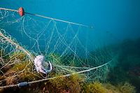 Lost Fishing Net over Reef, Cap de Creus, Costa Brava, Spain, Mediterranean Sea, Atlantic