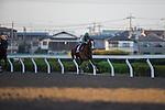 SAITAMA,JAPAN-NOVEMBER 22: K T Brave #6,ridden by Yutaka Take,wins the Urawa Kinen at Urawa Racecourse on November 22,2016 in Saitama,Saitama,Japan (Photo by Kaz Ishida/Eclipse Sportswire/Getty Images)