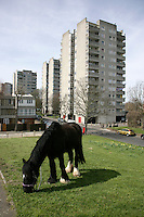 Apartment block and horse in east Thamesmead, southeast London, UK