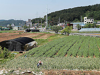 Landwirtschaft bei Daegu, Provinz,Gyeongsangbuk-do , Südkorea, Asien<br /> agriculture  in Daegu,  province Gyeongsangbuk-do, South Korea, Asia