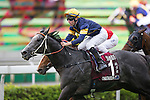 SHA TIN,HONG KONG-MAY 01: Chautauqua #-1 ,ridden by Tommy Berry ,wins the Chairman's Sprint Prize  at Sha Tin Racecourse on May 01,2016 in Sha Tin,New Territories,Hong Kong (Photo by Kaz Ishida/Eclipse Sportswire/Getty Images)