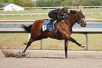 #102Fasig-Tipton Florida Sale,Under Tack Show. Palm Meadows Florida 03-23-2012 Arron Haggart/Eclipse Sportswire.