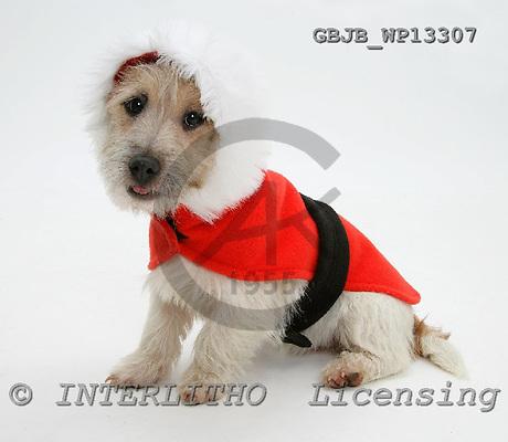 Kim, CHRISTMAS ANIMALS, photos, GBJBWP13307,#XA# stickers