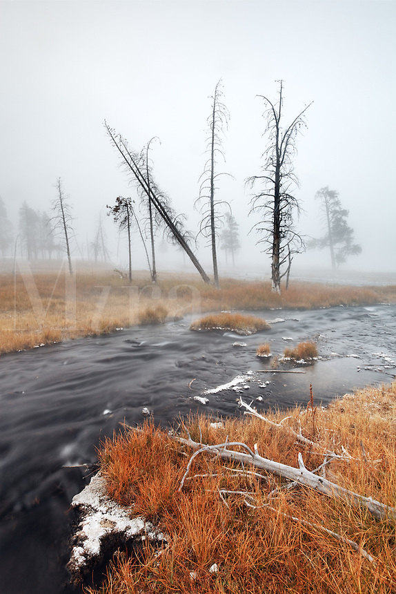 Thermal spring meandering through an autumn colored meadow, Firehole Lake Drive, Yellowstone National Park, Wyoming, USA