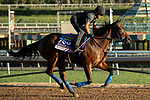 ARCADIA, CA  OCTOBER 26: Breeders' Cup Juvenile Fillies entrant Bast, trained by Bob Baffert, exercises in preparation for the Breeders' Cup World Championships at Santa Anita Park in Arcadia, California on October 26, 2019.  (Photo by Casey Phillips/Eclipse Sportswire/CSM)