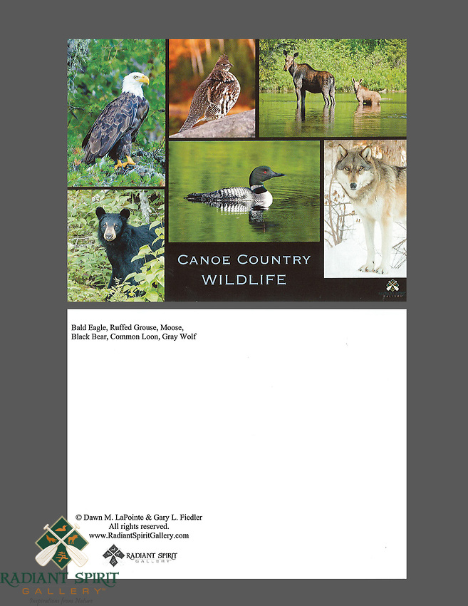 """Postcards, 10 pack, approx. 4.25"""" x 5.5"""""""