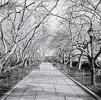 Walkway under trees<br />