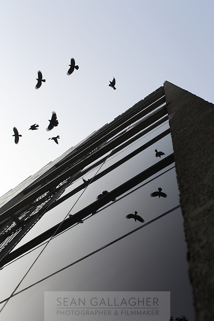 Birds fly near a modern hotel in central Kolkata, India. November, 2013