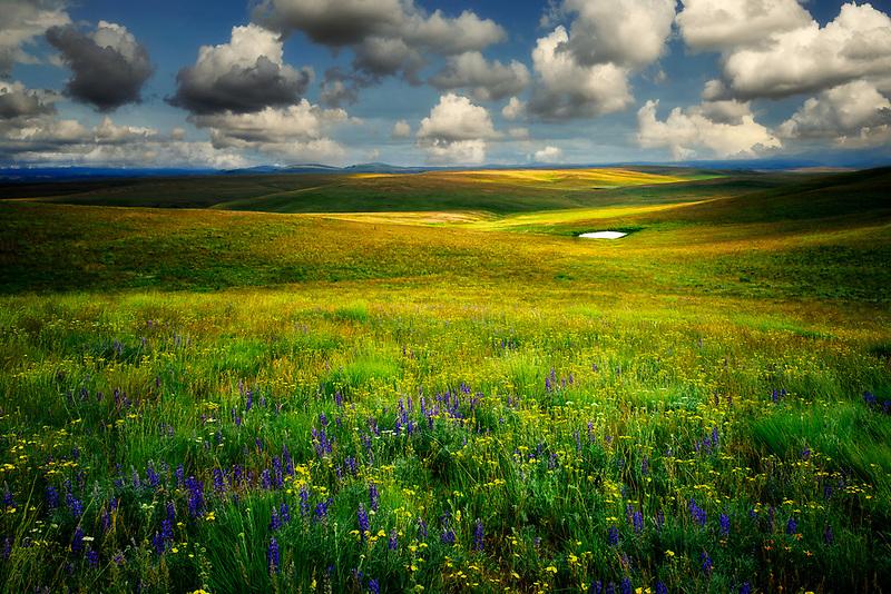 Wildflowers ,meadow, pond and pioneer cabin. Zumwalt Prairie, Oregon