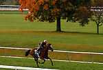 October 25, 2015: Grand Arch, trained by Brian Lynch, and owned by Jim and Susan Hill, is entered in the Breeder's Cup Mile.  Candice Chavez/ESW/CSM
