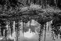 Black and white photo of clouds, sun and trees reflected in a Bow River eddy near Lake Louise in Banff Alberta.