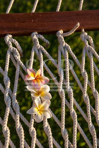 Mauritius. Frangipani flowers threaded in hammock strings.