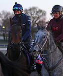 Terebellum, trained by trainer John H.M. Gosden, exercises in preparation for the Breeders' Cup Filly & Mare Turf at Keeneland Racetrack in Lexington, Kentucky on November 2, 2020.