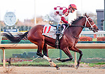 LOUISVILLE, KY -NOV 26: Farrell (jockey Channing Hill) wins the 73rd running of the G2 Golden Rod Stakes at Churchill Downs, Louisville, Kentucky. Owner Coffeepot Stables (Bob Cummings and Annette Bacola) and trainer Wayne M. Catalano. Malibu Moon x Rebridled Dreams, by Unbridled's Song. (Photo by Mary M. Meek/Eclipse Sportswire/Getty Images)