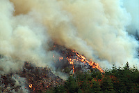 A clear-cut, logged hillside slash is exposed to a controlled burn in preparation for replanting. Oregon.