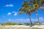 Anegada, British Virgin Islands, Caribbean<br /> Palm trees on the edge of a white sand beach at Cow Wreck Bay