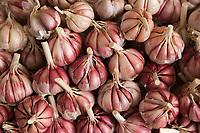 Afrique/Afrique du Nord/Maroc /Casablanca: le marché central boulevard Mohammed V détaail - étal ail violet