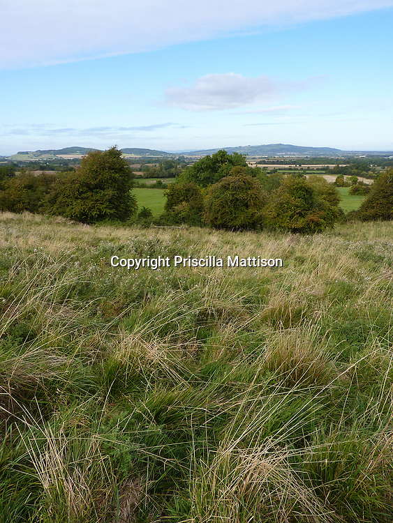 Cotswolds, England - September 20, 2009:  Wild grass grows on the hills above Stanton.