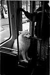 A dog on the tram in Amsterdam, Netherlands. Europe before the euro.