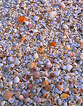 Sanibel Island, FL  © Mary Liz Austin <br /> A close up of the many shapes, sizes and colors of shells on Bowman's Beach