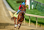 LOUISVILLE, KY - MAY 02: Gun Runner, trained by Steven Asmussen and owned by Winchell Thoroughbreds LLC and Three Chimneys Farm, exercises and prepares during morning workouts for the Kentucky Derby and Kentucky Oaks at Churchill Downs on May 2, 2016 in Louisville, Kentucky. (photo by John Voorhees/Eclipse Sportswire/Getty Images)