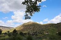Safari Highlands Ranch