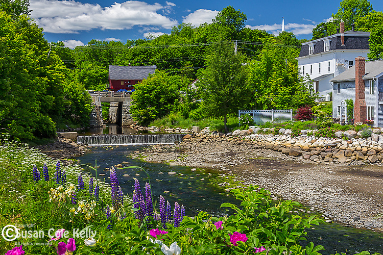 Roses in Blue Hill, Maine, USA