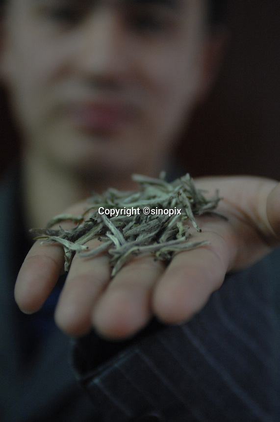 "He Meng Miao, 28, manager of the The Heng Yuan Chun Tea Farm in the mountains outside Fuding City, Fujian Province holds""Silver Tip"" tea.  Workers here are paid around 53 pounds a month during harvest season. The tea sells for upto 20 pounds a pot in the UK."