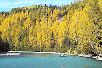 A cataraft floats down the upper Kenai River at the peak of fall colors.