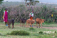 Tanzania. Maasai Village of Ololosokwan, Northern Serengeti.
